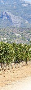 Vinos Tierra de Mallorca