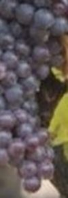 Mantonegro-Fogoneu