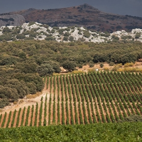 D.O. Sierras de Málaga