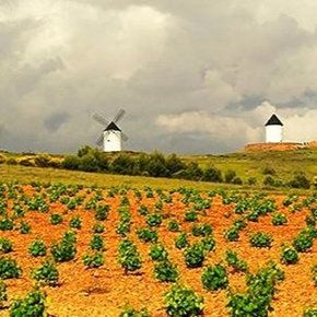 Vinos Tierra de Castilla