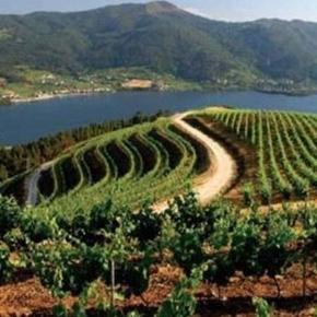 D.O. Rías Baixas (Galicia)