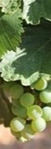 Verdejo